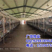 延安伊拉兔养殖基地,陕西定边伊拉兔养殖基地