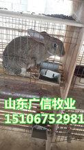 广元杂交野兔养殖基地,四川肉兔的价格