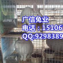 泰兴市养兔场泰兴养兔基地肉兔苗多少钱一只