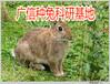 新疆肉兔养殖场,养殖杂交野兔如何谨防多种肠道疾病