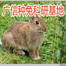 山东肉兔养殖场,一只兔子多少钱