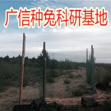 永昌县哪里有养兔场,甘肃兔子养殖的效益和利润