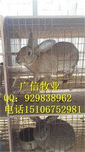 江苏哪里有肉兔养殖的,肉兔养殖场报价