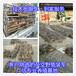 广东茂名地区的肉兔养殖基地
