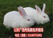 玉林种兔养殖场,广西纯种伊拉兔养殖场