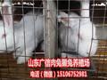 宁夏银川哪里有养兔场,宁夏獭兔养殖基地图片