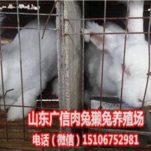 宁夏银川哪里有养兔场,宁夏獭兔养殖基地