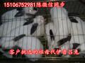 广东哪里有养兔场图片
