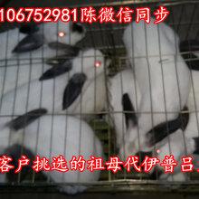 广东哪里有养兔场