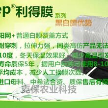 PEP利得膜农膜农业大棚膜大棚黑白膜大棚反光膜大棚防晒膜图片