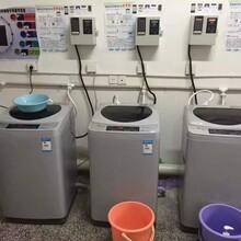 6.5公斤小天鹅TB65-C1208H商用投币洗衣机