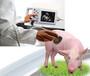 兽用B超机动物B超机宠物B超机